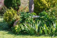 Detalhe de um jardim ajardinado Imagem de Stock