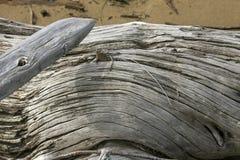 Detalhe de um log curvado da madeira lançada à costa no lago flagstaff, Maine imagens de stock