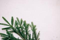 detalhe de um ramo do abeto do Natal em um fundo textured branco, espaço da cópia foto de stock