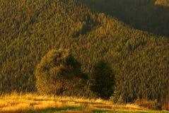 Detalhe de uma árvore no por do sol Foto de Stock Royalty Free
