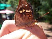Detalhe de uma borboleta em uma mão imagem de stock