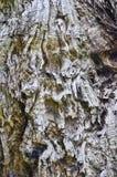 Detalhe de uma casca de árvore foto de stock royalty free