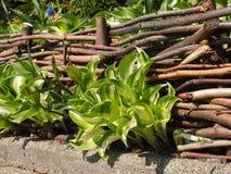 Detalhe de uma cerca de madeira imagem de stock royalty free