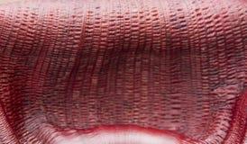 Detalhe de uma fronda da banana Imagem de Stock