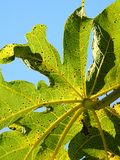 Detalhe de uma planta verde: linhas e textura bonitas imagem de stock