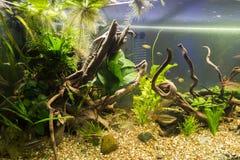 Detalhe do aquário Imagem de Stock