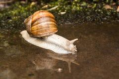 Detalhe do caracol em Klingenberg Fotografia de Stock