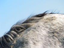 Detalhe do cavalo (30) imagens de stock