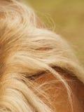 Detalhe do cavalo imagens de stock royalty free