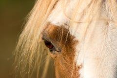 Detalhe do cavalo imagens de stock