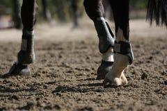 Detalhe do cavalo Imagem de Stock Royalty Free