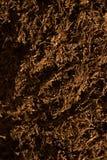 Detalhe do cigarro do corte fino Imagem de Stock Royalty Free