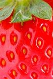 Detalhe do close up da morango Imagens de Stock Royalty Free