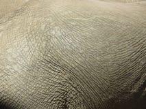 Detalhe do close up da pele do elefante Fotografia de Stock