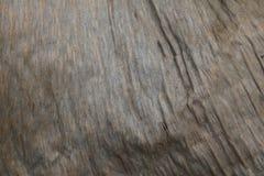 Detalhe do close-up de uma textura seca modelada da folha fotos de stock