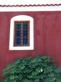 Detalhe do edifício e árvore de figo Imagens de Stock