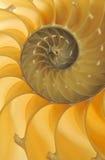 Detalhe do escudo do nautilus Imagem de Stock