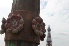 Detalhe do ferro da rosa do vermelho de Lancashire em um cargo da lâmpada no cais norte Blackpool com a torre de Blackpool vista  Fotos de Stock Royalty Free