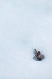 Detalhe do inverno Foto de Stock Royalty Free