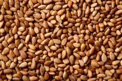 Detalhe do macro da textura das sementes de sésamo Imagens de Stock Royalty Free