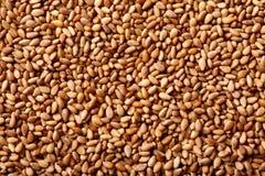 Detalhe do macro da textura das sementes de sésamo Foto de Stock