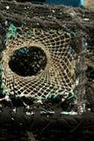 Detalhe do potenciômetro de lagosta Imagens de Stock Royalty Free