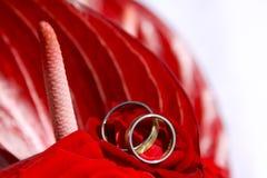Detalhe dos anéis de casamento Fotografia de Stock