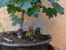 Detalhe dos bonsais Fotografia de Stock Royalty Free