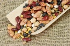 Detalhe dos feijões secados misturados Fotografia de Stock
