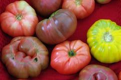 Detalhe dos tomates da herança Imagem de Stock