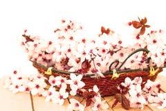 detalhe floral bonito Fotos de Stock Royalty Free