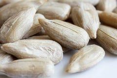 Detalhe macro extremo de sementes de girassol descascadas Foco raso Imagem de Stock Royalty Free