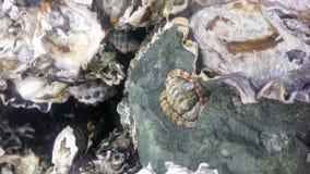 Detalhe marinho da textura da rocha na rocha Imagens de Stock