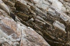 Detalhe molhado das rochas Fotos de Stock Royalty Free