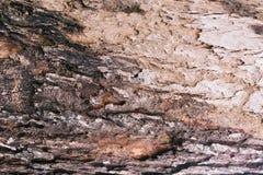 Detalhe na árvore Fotografia de Stock Royalty Free