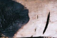 Detalhe na árvore Fotografia de Stock