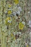 Detalhe na árvore fotos de stock royalty free