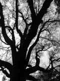 Detalhe na árvore Imagem de Stock