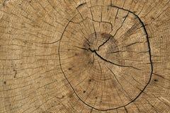 Detalhe na árvore fotos de stock
