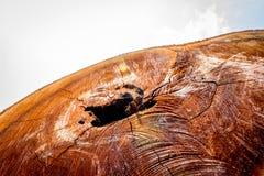 Detalhe na árvore Imagem de Stock Royalty Free
