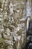 Detalhe na árvore Imagens de Stock