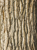Detalhe na árvore Foto de Stock