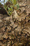 Detalhe na árvore foto de stock royalty free