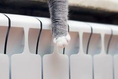 Detalhe o tiro das patas macias do gato quando mentiras na soleira imagens de stock