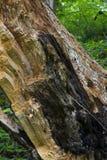 Detalhe quebrado do coto na floresta foto de stock royalty free