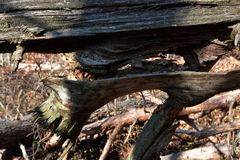 Detalhe rachado da árvore Fotos de Stock