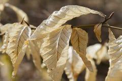 Detalhe seco da folha, fotografia macro, luz do dia Fotos de Stock