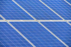 Detalhe solar da planta Fotos de Stock Royalty Free