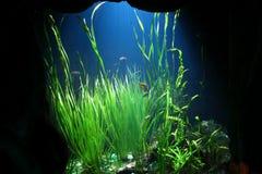 Detalhe subaquático do mundo Fotografia de Stock