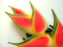 Detalhe tropical da flor fotografia de stock royalty free